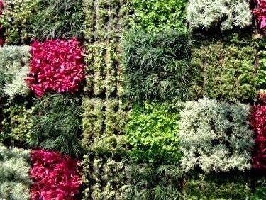 varias plantas en un muro verde